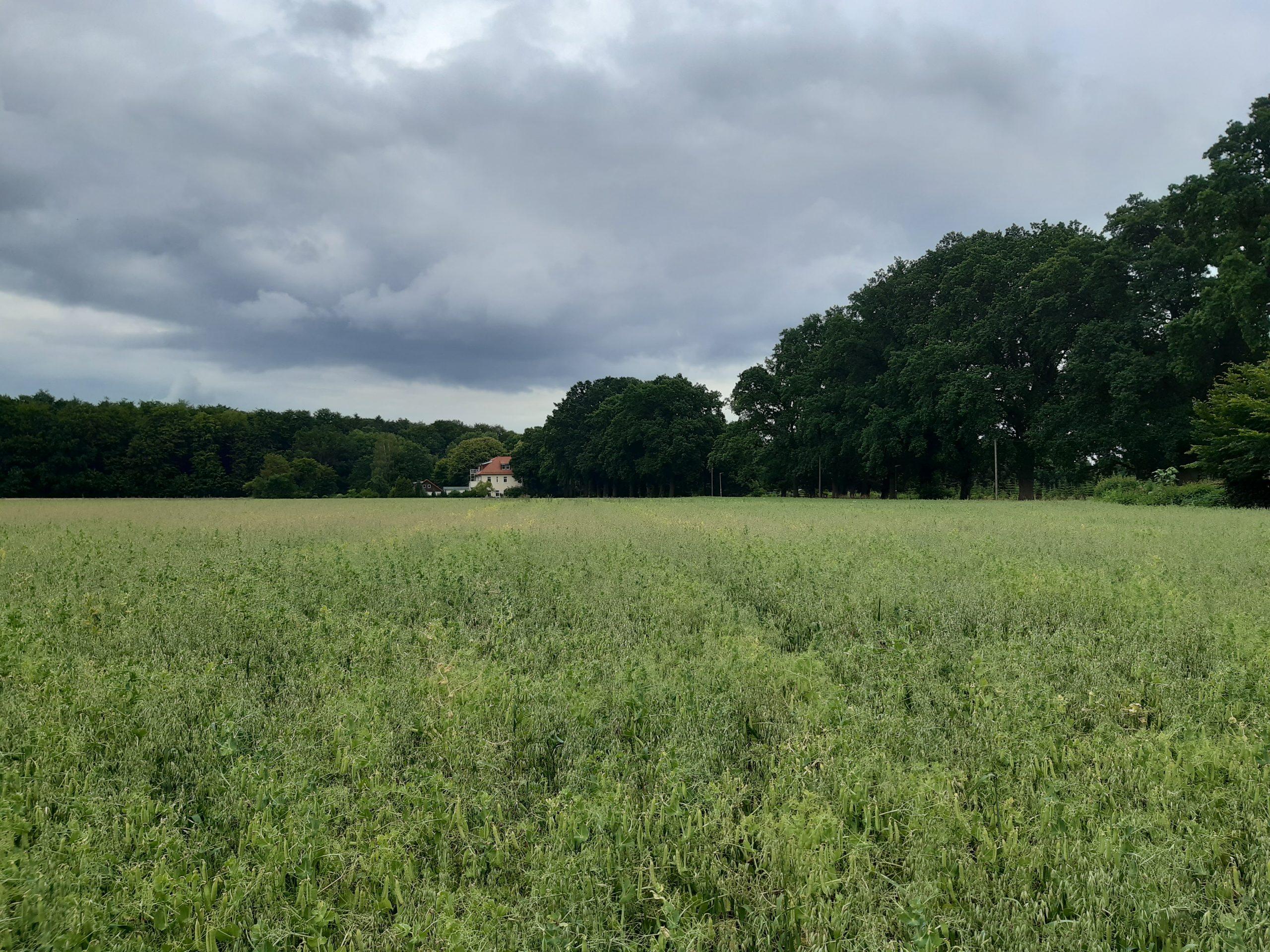 Vergleichsfläche Minkenhof 08.07.2020