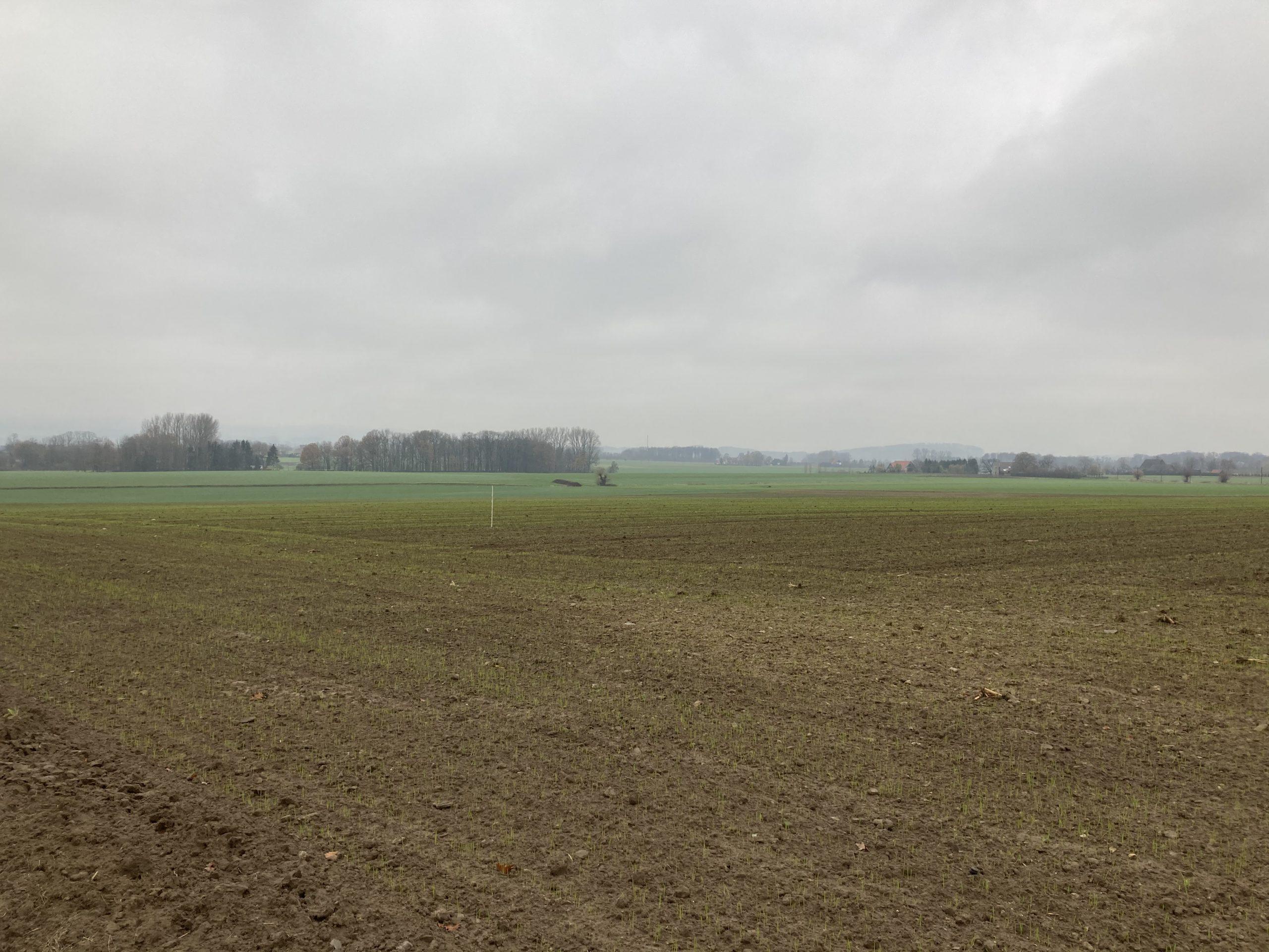 Vergleichsfläche Meierfrankenfeld 07.12.2020