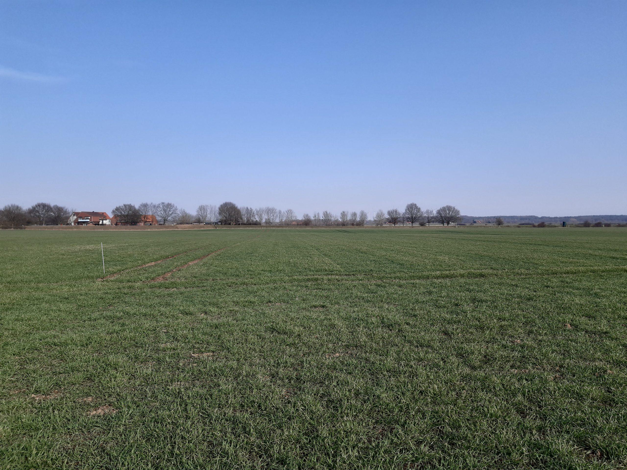 Maßnahmefläche Blohme 03.03.2021, Foto: KÖN