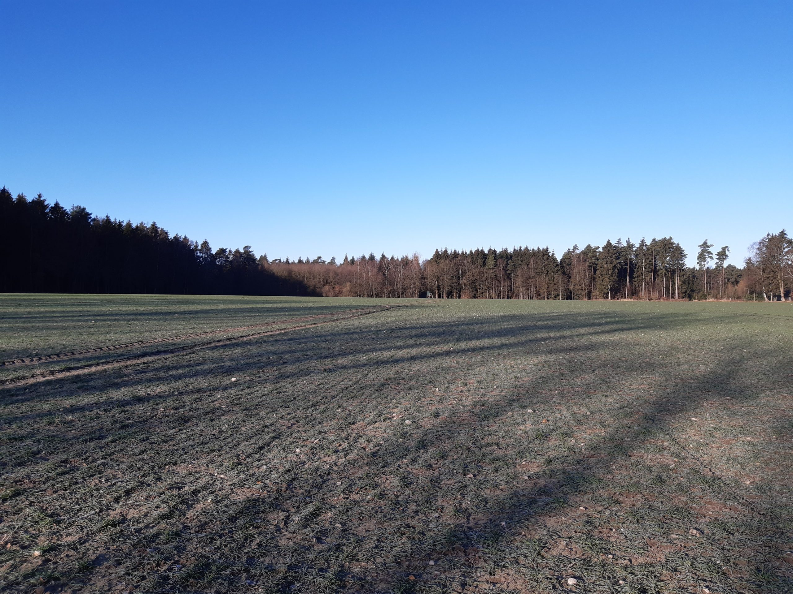 Maßnahmenfläche Schwesig 05.03.2021, Foto: KÖN