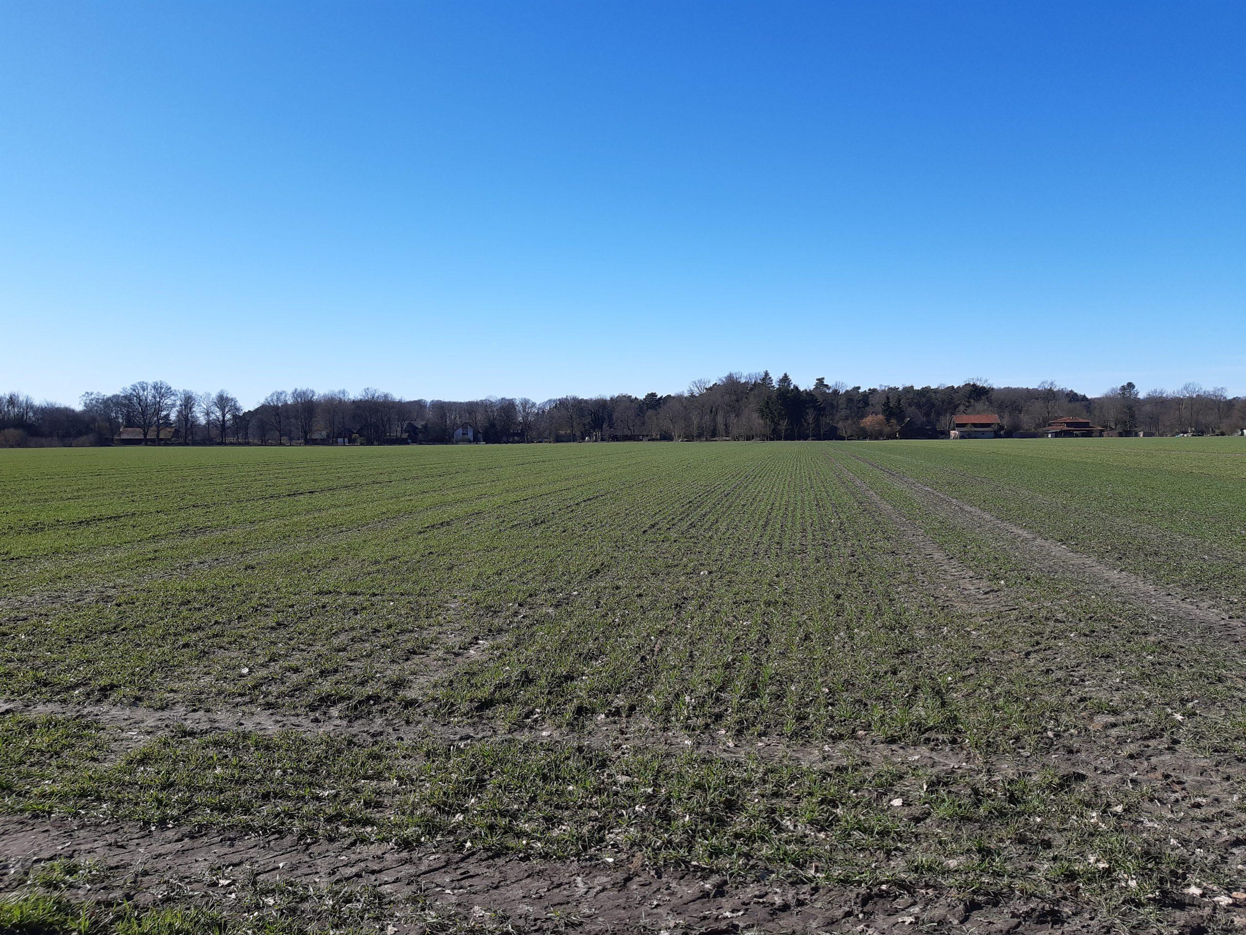 Vergleichsfläche Hesse 05.03.2021, Foto: KÖN
