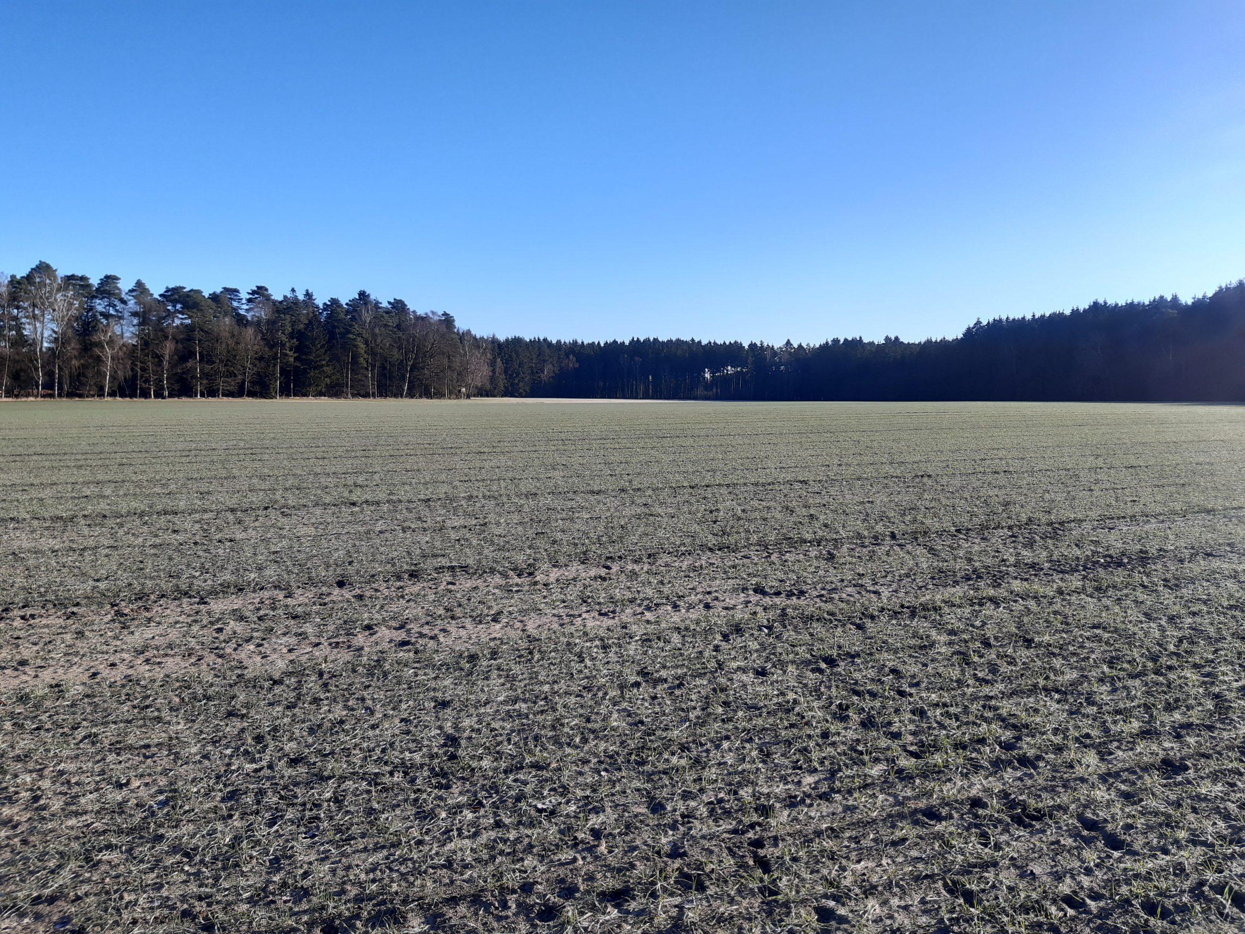 Vergleichsfläche Meyerhoff 05.03.2021, Foto: KÖN